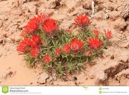 desert flower stock photos image 34041883