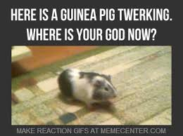Shaved Guinea Pig Meme - photo collection pin pig meme on