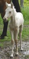 How To Tell If A Horse Is Blind White Horse Wikipedia
