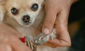 pet grooming tips and tricks pawstars pet care