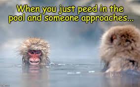 Funny Monkey Meme - funny monkey imgflip