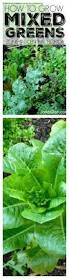 vegetable garden plans zone 9 home outdoor decoration