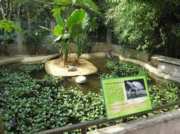 turtle pond design for your backyard house exterior and interior