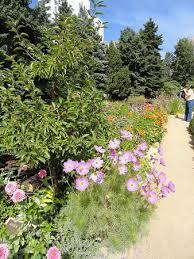 the japanese garden picture of denver botanic gardens denver
