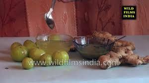 medicinal plants and herbs of india kannada version youtube