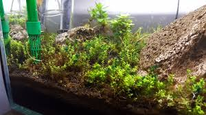 best way to get rid of this hair algae the planted tank forum