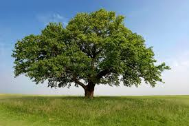 secret meaning of trees oversixty