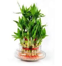 plants for office desk delectable 80 plants for office desk design decoration of 9 low