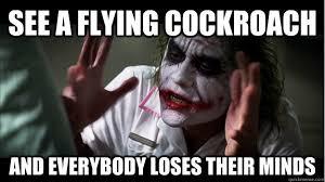 Flying Cockroach Meme - kenapa ada manusia yang takut lipas
