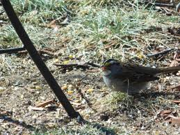 creating a certified backyard wildlife habitat part 2 deep green