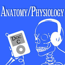 Learning Anatomy And Physiology Free Online Biology 2110 2120 Anatomy And Physiology With Doc C By Dr Gerald