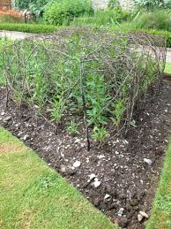 peas and beans structures pea canes bean canes beautiful