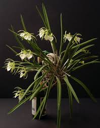 orchids care mounted orchid care