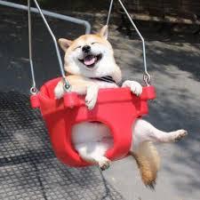 Happy Dog Meme - create meme when dota no when dota no happy dog shiba inu