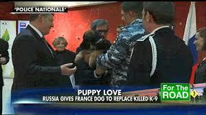 belgian shepherd diesel russia gives france a puppy in honor of slain k9 fox news insider