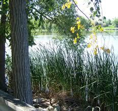 Michigan vegetaion images 295 best michigan 39 s lakes waterways images jpg