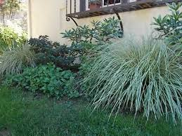 ornamental grasses add drama height color and texture your