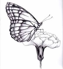 colored butterfly and flower drawing