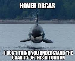Physics Meme - silly orcas not following the laws of physics meme guy