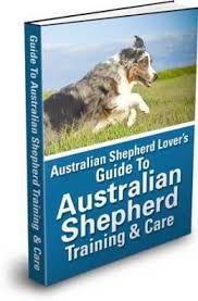 australian shepherd kalamazoo 108 best australian shepherd images on pinterest australian