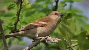 science today saving birds from windows california academy of