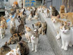 cat island japan s cat island receives massive food donations after plea for