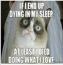 Best Grumpy Cat Memes - 53 best best of grumpy cat images on pinterest funny things funny