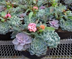 succulent gardens in florida home outdoor decoration
