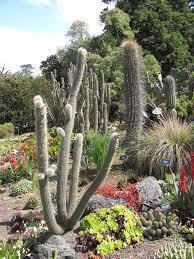 botanical gardens fort bragg ca festival of lights 295 best welcome to mendocino coast botanical gardens images on