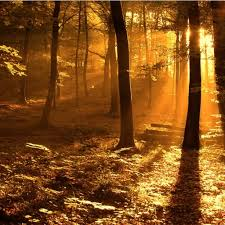 Wall Mural Sunrise In A Forest Wall Paper Self Adhesive Golden Sunlit Forest Ipad Wallpaper Ipad Wallpapers Pinterest
