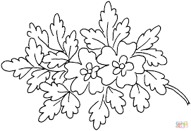 oak blossoms coloring page free printable coloring pages