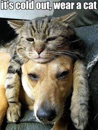 Head Cold Meme - dog with cat laying on head justpost virtually entertaining