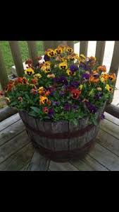 whiskey barrels make great planters for vegetables and flowers