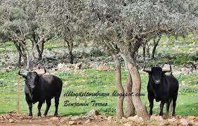 el blog del toro bravo abril 2014