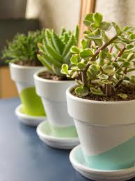 growing succulents indoors diy