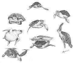 drawn turtle turtle swimming pencil and in color drawn turtle