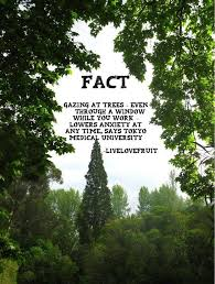 they re our friends the best medicine tree facts