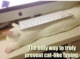 Keyboard Cat Meme - i can has cheezburger keyboard cat funny animals online