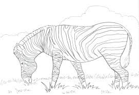 marty zebra madagascar coloring pages kids sheets marty zebra
