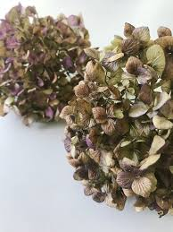 Dried Hydrangeas Diy Twig And Dried Hydrangea Fall Wreath Thistlewood Farm