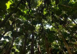 daintree rainforest living cooper creek wilderness