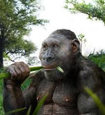 did humans really come from the ancient chimpanzee family quora