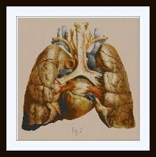 Anatomy Of Human Heart Pdf Anatomical Human Lungs And Heart Cross Stitch Pattern Pdf