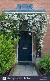 Navy Blue Front Door Clematis Montana U201d In Flower Around The Navy Blue Front Door And