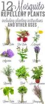 12 Best Plants That Can by 12 Garden Plants That Repel Mosquitos So You Can Enjoy Being