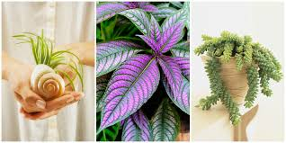 Indoor Fragrant Plants 17 Best Indoor Plants Easy Indoor Gardening Ideas