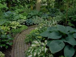 best 25 hosta gardens ideas on pinterest shade garden hosta