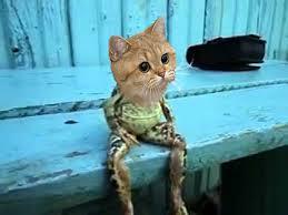 Cat Sitting Meme - frog cat sitting on a bench like a human starecat grafics cat