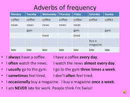 adverbs of frequency my english classes pinterest adverbs