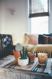decorating indoor cactus in living areas 20 simple cactus ideas